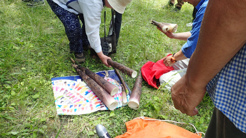 マダケのタケノコも収穫できました