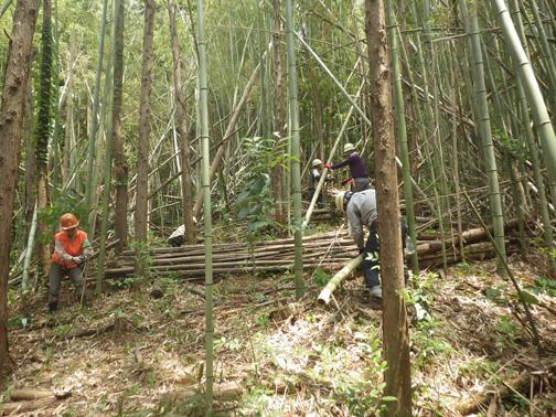 倒れた竹がたくさんあります
