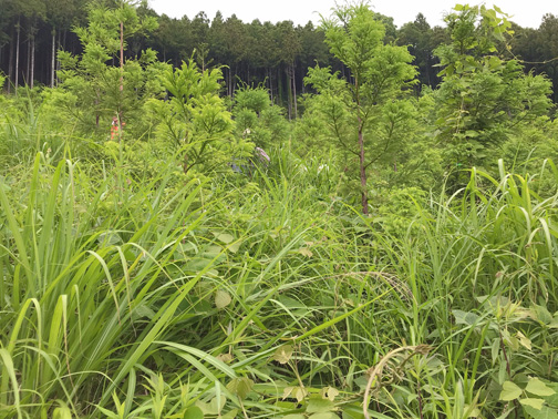 植裁木の間に草が生い茂る