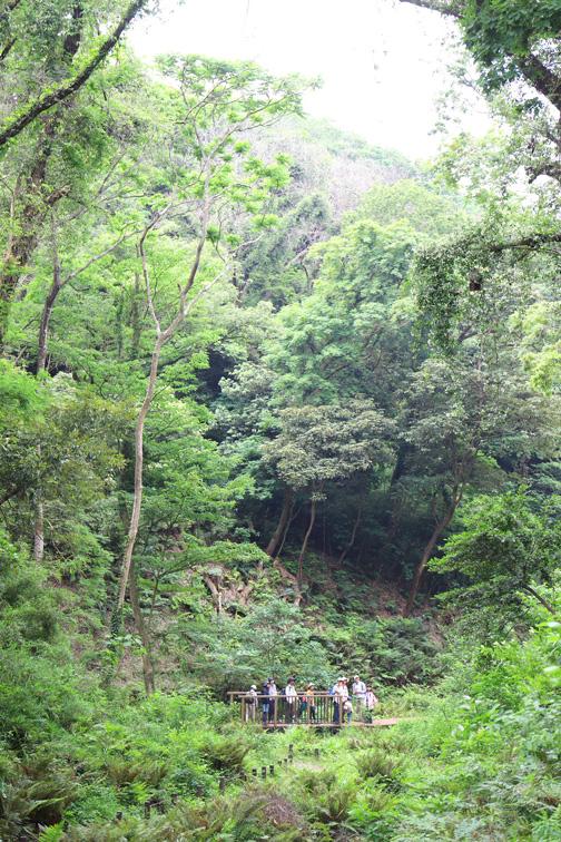 浦の川源流域の引橋入口からシダの森を抜ける