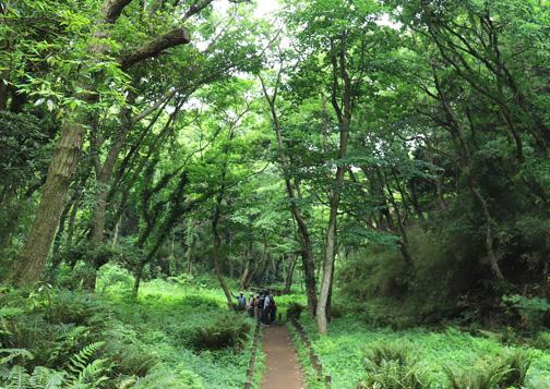 中流域のハンノキ林