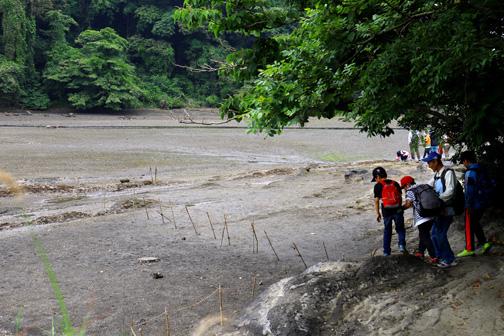 河口干潟でチゴガニのダンスを見学