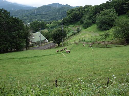 下刈実施地直下の「めんようの里」放牧場。羊が何匹?