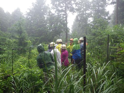 シカ柵内に入り、班ごとに森林インストラクターの説明をうける