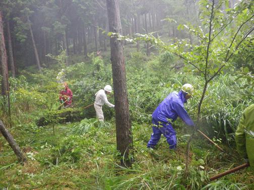 作業開始。ヤマザクラやイロハモミジの植栽木がはっきりと見えてきました