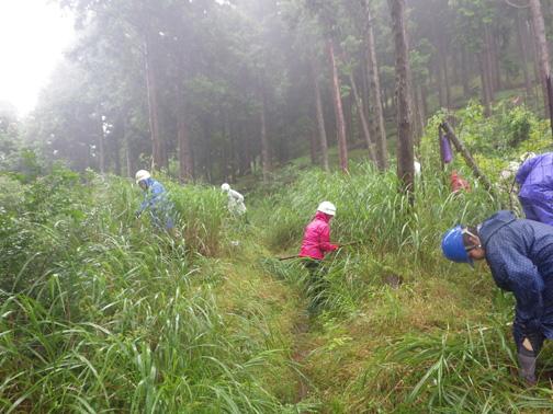 隣接するハイキングコース沿いも刈りはらいました