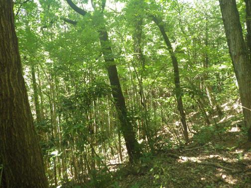 作業前の森の状況。広葉樹林に竹が侵入している