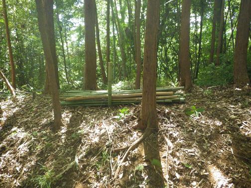 伐竹した竹も整然と積み上げた