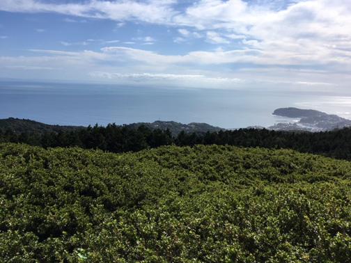 前日の雨も上がり、見事晴れ、星が山公園展望台からは真鶴半島が望めました