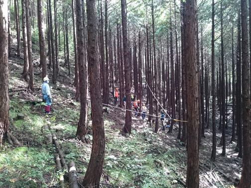 30年生のヒノキ林。間伐して、下層植生を増やします