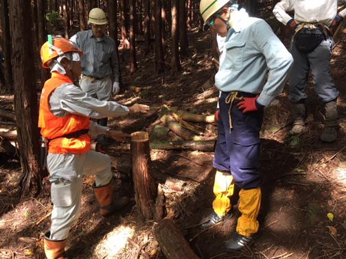 伐採後の切り株から、伐採を検証します