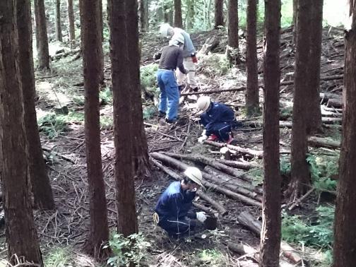 最後に枝を切り、短く切って林内にせいりして作業完了