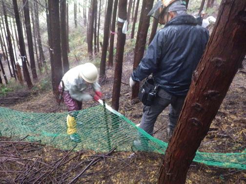 受け口を作ります。緑色のネットは植栽時にウサギの食害を防ぐ目的で設置した柵