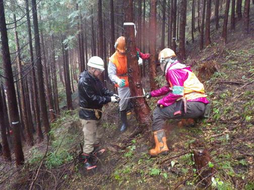 森林インストラクターの指導により、受け口を入れます