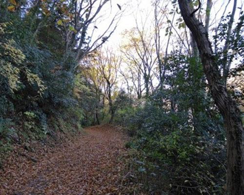 紅葉の矢倉沢往還でミカン狩り