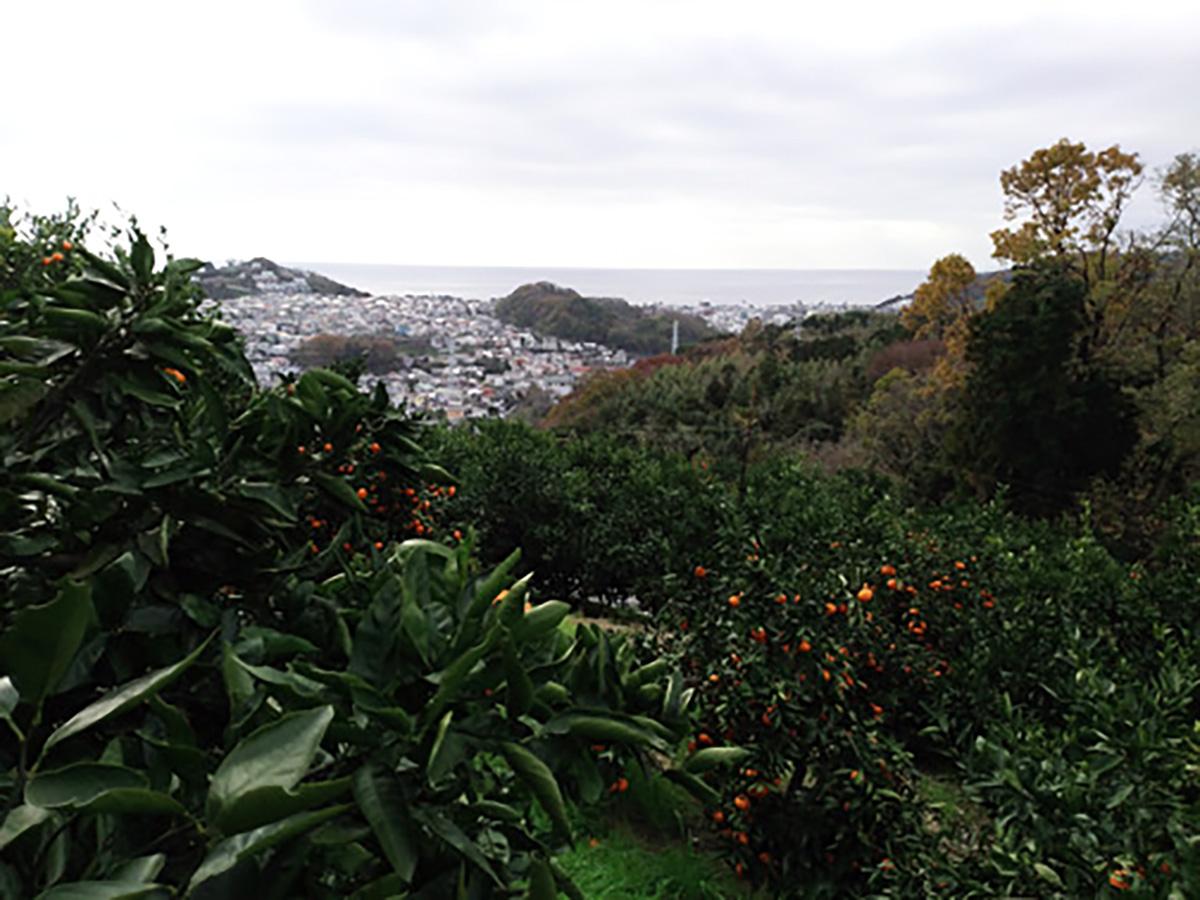 蜜柑畑と歴史の石垣山一夜城より相模湾を望む