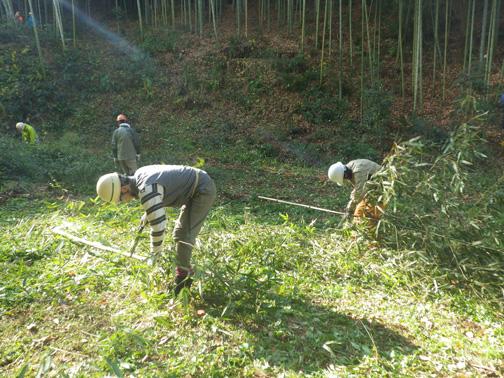 伐採した竹を短く切り、枝を払う