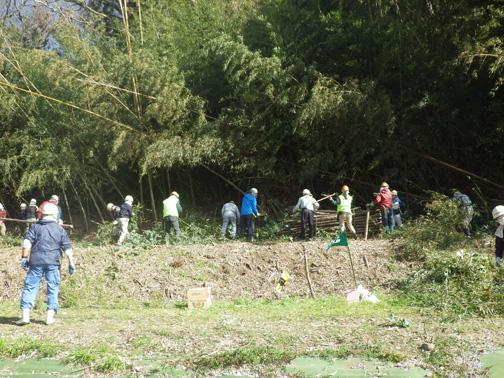 横一列になって倒れた竹の伐採や古い竹の搬出作業が始まりました