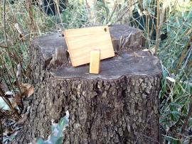 伐採した切り株と生み出された木工品