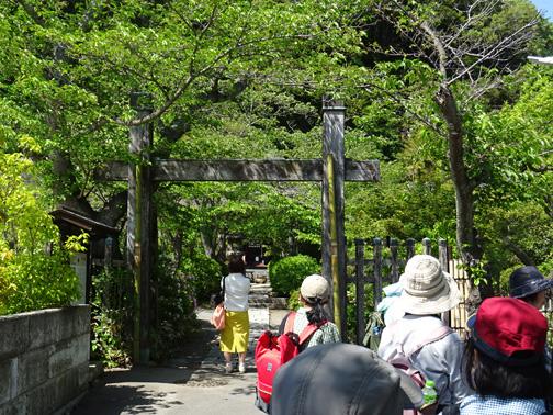 古都鎌倉 春の緑と歴史の自然探訪
