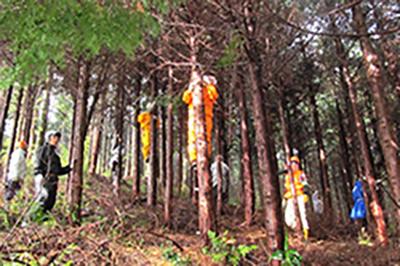 県民参加の森林づくり事業