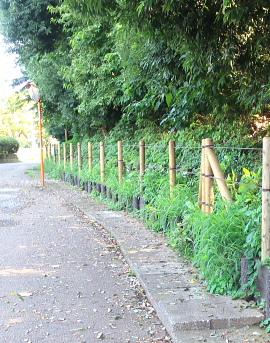 久田緑地の林縁部