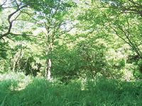 身近な緑地の保全活動