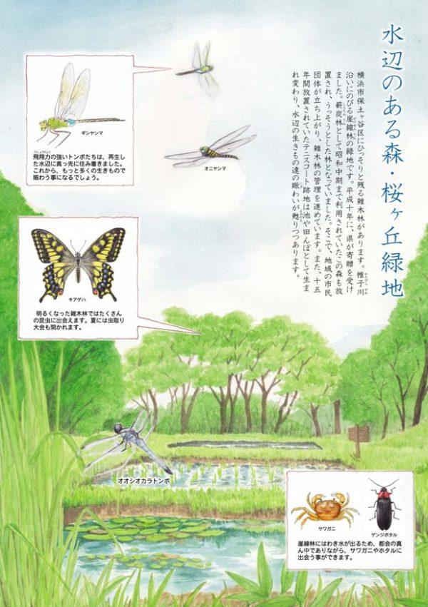 桜ヶ丘緑地の概要