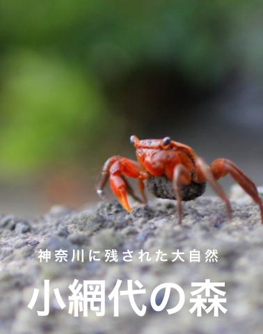 神奈川に残された大自然 小網代の森