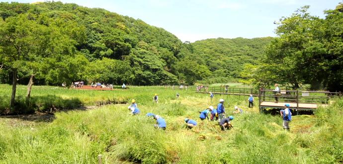 小網代の森の保全活動