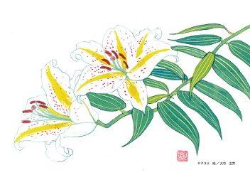 lilyletter