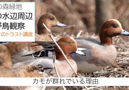 水辺の野鳥観察